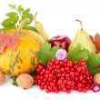 Stock Photo: Thanksgiving day still life