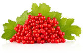 Red berry with green leaves — Stock Photo