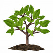 Stock Photo: Little tree