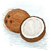 Coconut. — Stock Vector