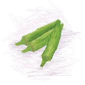 Closeup illustration of fresh okra vegetable isolated. — Stock Vector