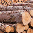 Log Yard 3 — Stock Photo #11309009