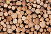 Log Yard 2 — Stock Photo