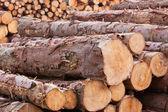 Log Yard 3 — Stock Photo