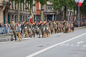 Marching Dogs — Stock Photo
