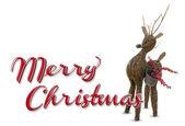 Merry christmas raindeer — Stock Photo