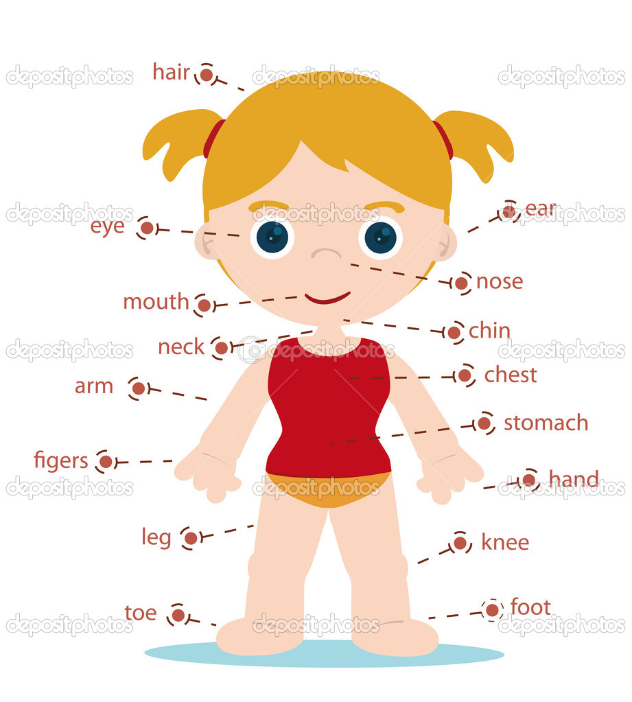 Parts of Body Name Chart Girl Body Parts Chart For