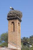 Stork on chimney — Stock Photo