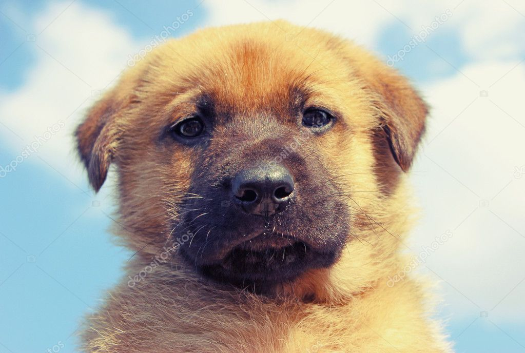 Portrait of cute puppy — Stock Photo #11119255