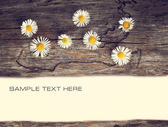 Daisies against teksturі old tree, plenty of space for text — Foto de Stock