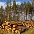 Heap of pine tree trunks on forest glade — Stock Photo #10756188