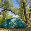 Touristic tent in forest — Foto de stock #10756610