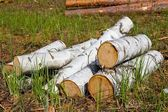 Heap of birch logs in a grass — Stock Photo