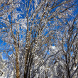 Quiet frozen winter forest — Stockfoto #11360054