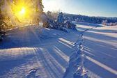 Bosque de invierno en un rayos de sol de la mañana — Foto de Stock
