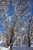 Bosque de invierno helado tranquilo — Foto de Stock