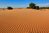 Sand desert at the evening — Stockfoto