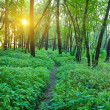 Early morning in a forest — Stock Photo #11371124