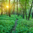 Early morning in a forest — Stock Photo