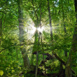 Sunrays pushing through a green forest — Stock Photo