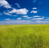 Beautiful green steppe — Stock Photo