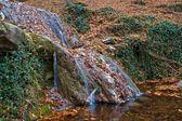 River in a autumn mountain canyon — Stock Photo