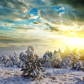 Winter forest at the sunset — Fotografia Stock