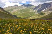 Alpine green mountain valley — Stock Photo