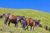 Horses on a green pasture — Stok fotoğraf