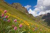 Beautiful flowers on a mountain slope — Stock Photo