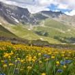 Alpine meadows — Stock Photo #12024345
