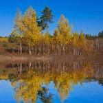 Autumn birch grove on a lake coast — Stock Photo #12025475