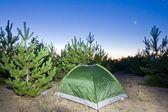 Gröna turistiska tält i en skog på natten — Stockfoto