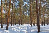 Camino en un bosque de invierno — Foto de Stock