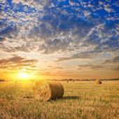 Haystacks on a autumn field — Stock Photo