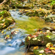 Small brook in a autumn canyon — Stock Photo #12270175