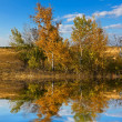 Stock Photo: Autumn birch grove reflected in a water