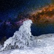 Snowbound pine tree on a night starry sky background — Stock Photo