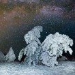 Winter night forest scene — Stock Photo