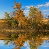 Autumn birch grove reflected in a water — Stock Photo
