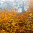 Red autumn forest in a mist — Stock Photo #12400245