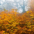 Stock Photo: Red autumn forest in mist