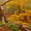Stock Photo: Dry tree in autumn forest