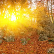 Stock Photo: Autumn forest in rays of sun