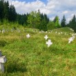 Stock Photo: Old cemetery in forest