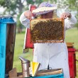 Beekeeper with honeycombs — Stock Photo