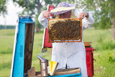 Apicoltore con nido d'ape — Foto Stock