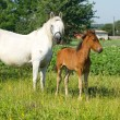 Mother and baby horse — Stock Photo