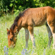 Beautiful foal — Stock Photo