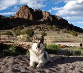 German Shepherd in Colorado — Stock Photo